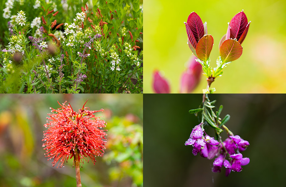 colourful flowers in the Drakensberg area